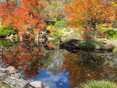 Reflections – The world appears to be upside down with all the reflections of autumn-hued trees in the ponds at the Japanese Gardens. Note the carved Japanese lanterns on the bank, the large stone in the water and a view of a pagoda.